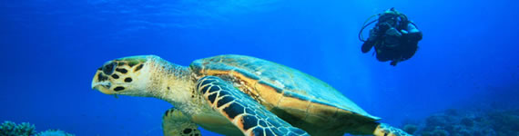 Scuba Diving South Africa Durban